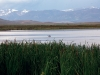 north-park-walden-migratory-birds-in-arapaho-national-wildlife-refuge