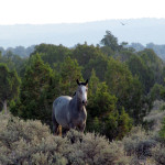 wild horse -RonWilley